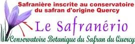 safranerio